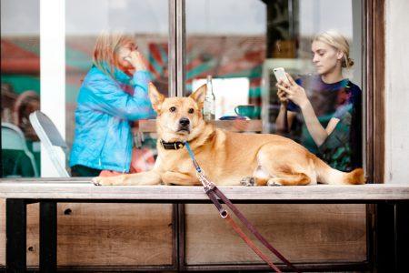 Wanderungen mit Hund
