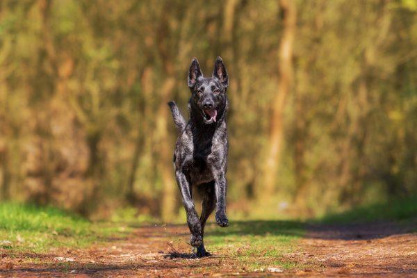 Wanderurlaub mit Hund in Bayern